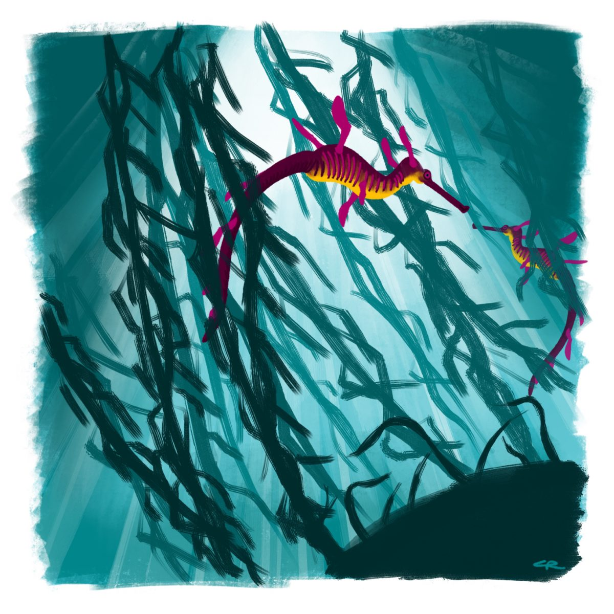 An illustration of two sea dragons swimming through seaweed