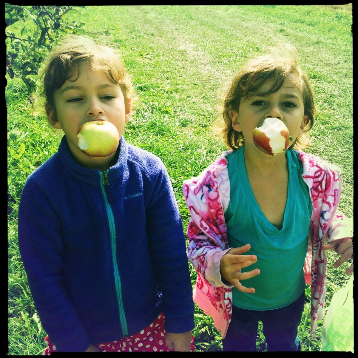 img of apple picking